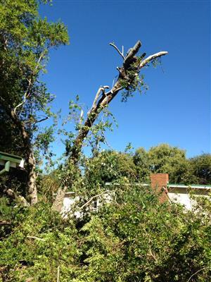 Savannah Tree felling company 0739260524