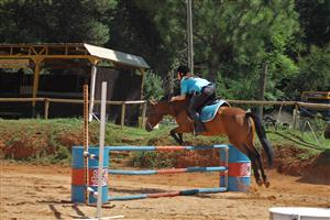 Once in a lifetime Boerperd mare for sale!