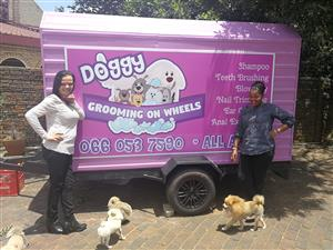 Professional Mobile Doggy Grooming Service All areas