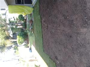 Landscaping and instant lawn fresh from farm