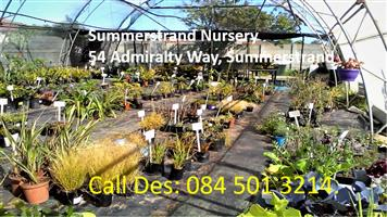 Pots, Summerstrand Nursery.
