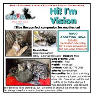 Vision of beauty - a bengal look-a-like to adopt from CatzRus.