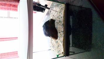 Fish tank, aquarium