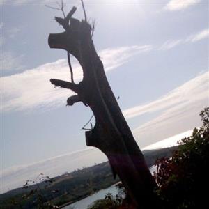 Ptk tree felling