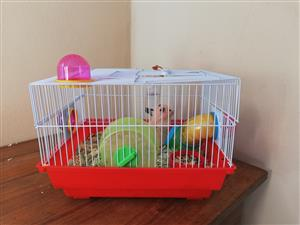 Hamster cage plus 2 Hamsters for sale