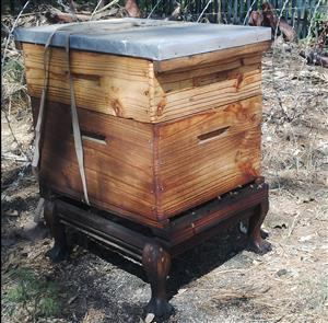Beehives colonized