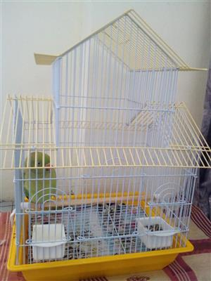 Brand new bird cages for sale bigger ones 600 and smaller ones for 400 if interested contact me on 0725966667. #pls no time wasters