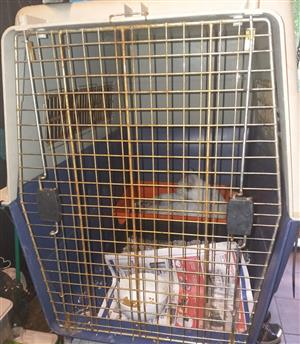Transport Kennel for dogs and cats