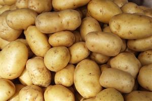 fresh sweet exported yellow potato than Egypt potato