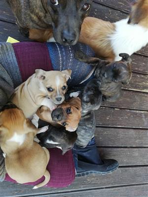 Puppies R500