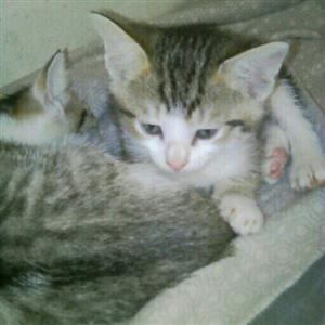 2 Gorgeous kittens need homes