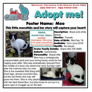 Moo and Boo - Doo come and meet them - Yoo won't regret it! CatzRus kittens, Pretooria East.