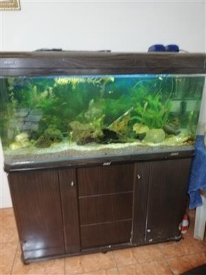 Fish tank including fish