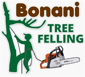 AFFORDABLE PROFESSIONAL TREE FELLING IN GAUTENG