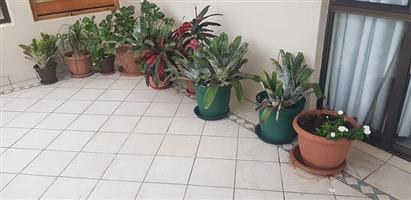 Green and brown pot plants for sale