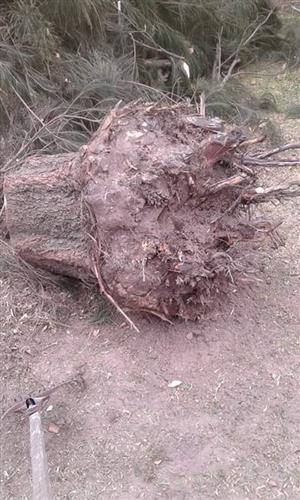 Stumps uprooting in Charlo;Port Elizabeth