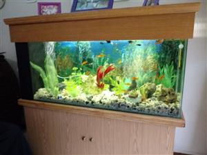 Complete fish tank