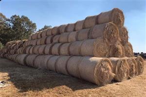 Livestock feed Gestropte Tef 1.2m