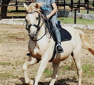 Rent a Horse (Half lease)