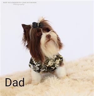 Yorkshire Terrier    Yorkies