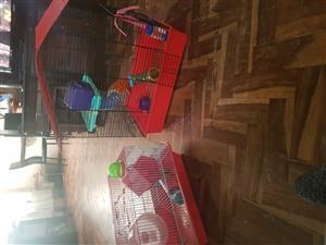 Hamster hokke