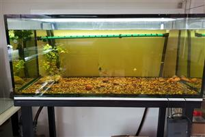 Custom 4ft tank for sale