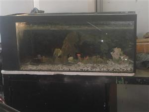 Complete FISH tank with Pumps (Used) BARGAIN