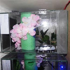 small glass enclosure for crested geckos