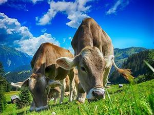 Farm for sale near Bela-Bela!