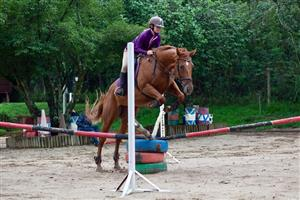 Very well bred Tb mare