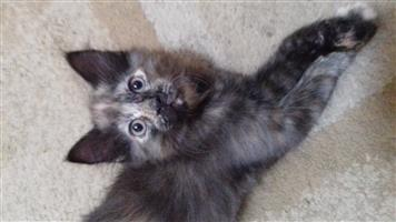 2 kittens looking for good homes