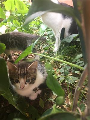 Lovely kittens looking for new forever homes