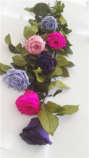 Fresh long-lasting roses available in Westville