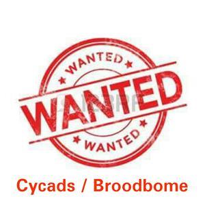 Looking for Cycads (Broodboom)