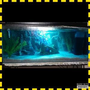 100L fish tank for sale