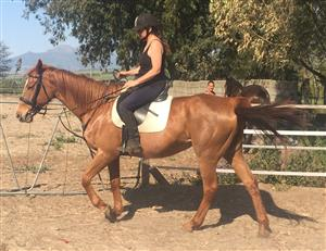 Horse for half lease