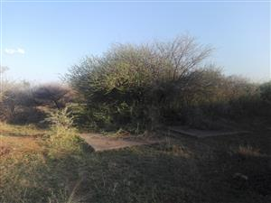 10 hectares plot