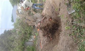 Stumps uprooting in Newton park,Port Elizabeth