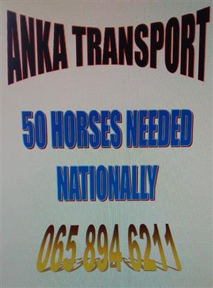 50 TRUCK HORSES REQUIRED NOVEMBER