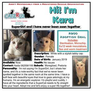 If you want to adopt a cat for her personality, then Kara's your gal!