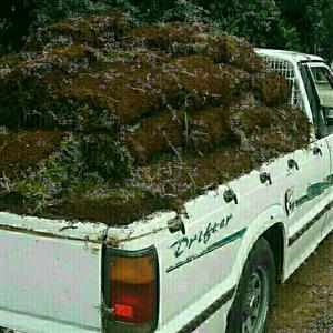 Instant lawn for sale