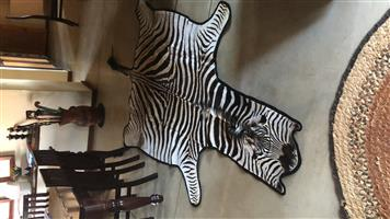 Brand new Zebra skins with black under veld