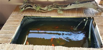 Goldfish and pond for sale
