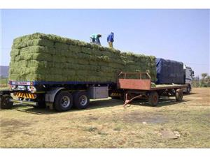 Fresh Grade A Lucerne bales/Alfafa Hay for Animal Feeds (R65/Bale)