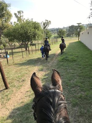 Horse riding & Livery