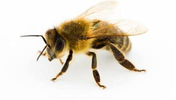 bees , wasps , removal of bees , hives or Swarms
