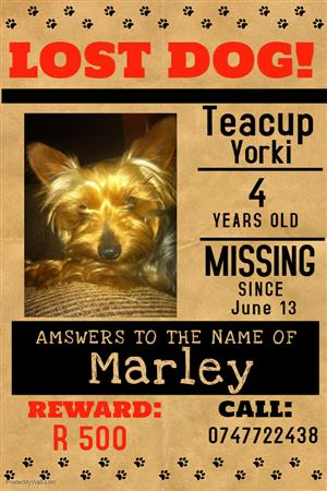 LOST 13TH JUNE 2018 MARLEY YORKIE