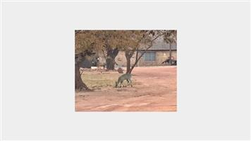 ONLINE AUCTION! 1000m2 vacant stand at Olifants River Lodge between Middelburg and Witbank.