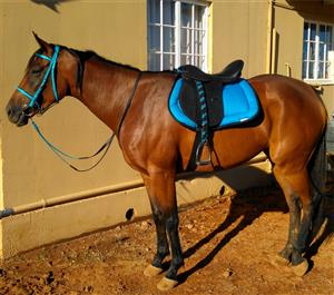 Thoroughbred merrie te koop