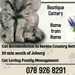 Boutique Cattery